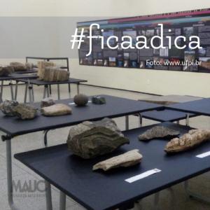 Fotografia do museu de Arqueologia e Paleontologia da UFPI, uma grande sala com paredes brancas, diversas mesas negras dispostas por toda a sala, em cima de cada mesa rochas e fósseis e ao lado de cada rocha e fóssil um identificador.